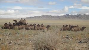 南South Gobi