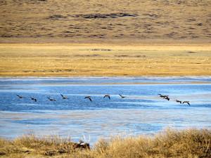 Ulaanbaatar/Ugii Lake. Drive to Ugii Lake /Arkhangai province