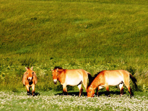 Hustai National Park.